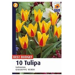 Tulipany Giuseppe Verdi