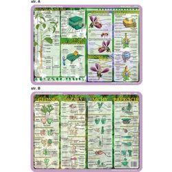 Podkładka edukacyjna. Budowa rośliny i kwiatu, cykl rozwojowy - glony, grzyby, mchy, paprocie