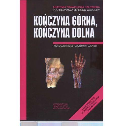 Książki o zdrowiu, medycynie i urodzie, Kończyna górna kończyna dolna Anatomia prawidłowa człow. (opr. miękka)