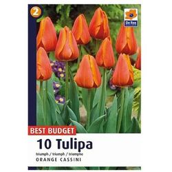 Tulipany Orange Cassini
