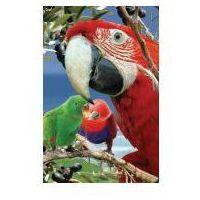 Pozostałe artykuły szkolne, Mini kartka 3D Papuga
