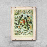 Plakaty, Plakat vintage Plakat vintage Ptaki Adolphe Millot