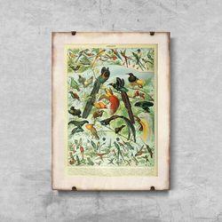 Plakat vintage Plakat vintage Ptaki Adolphe Millot