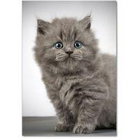 Obrazy, Foto obraz akrylowy Szary brytyjski kot