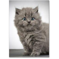 Foto obraz akrylowy Szary brytyjski kot